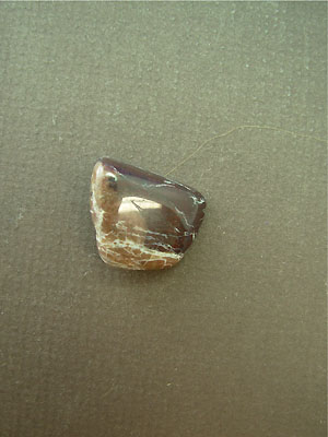 Petrified Wood Tumbled Stone