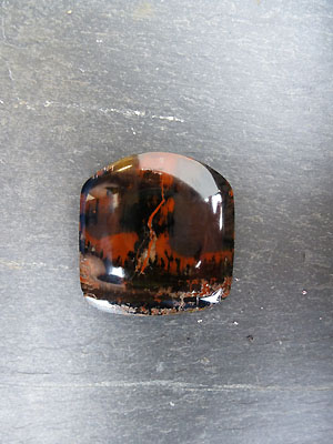 Petrified Wood Freeform Designer Cabochon