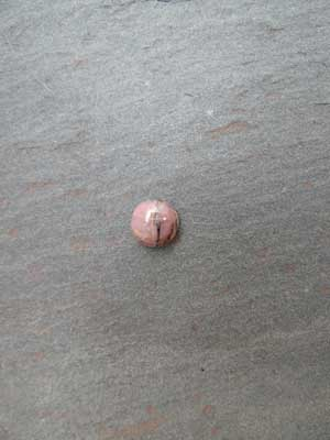 8mm Rhodonite Round Cabochon